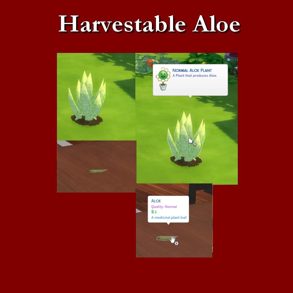HarvestableAloe.jpg