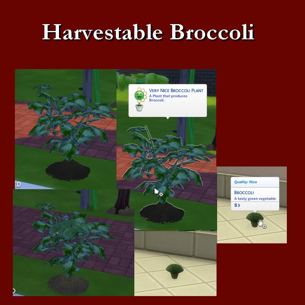 HarvestableBroccoli.jpg