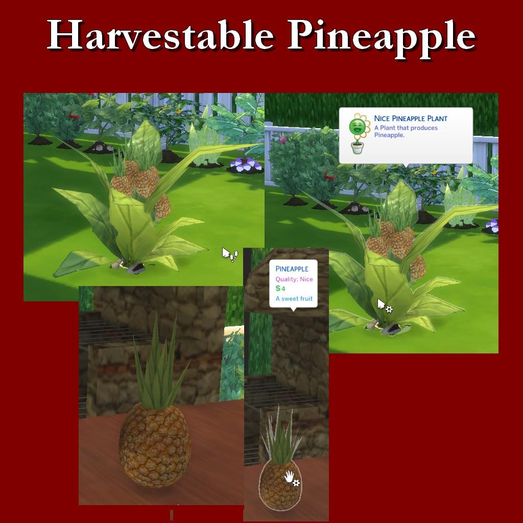 HarvestablePineapple.jpg