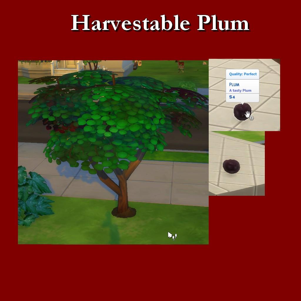 HarvestablePlum.jpg