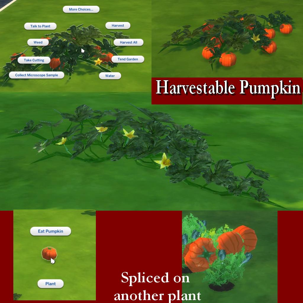 PumpkinPost2.png