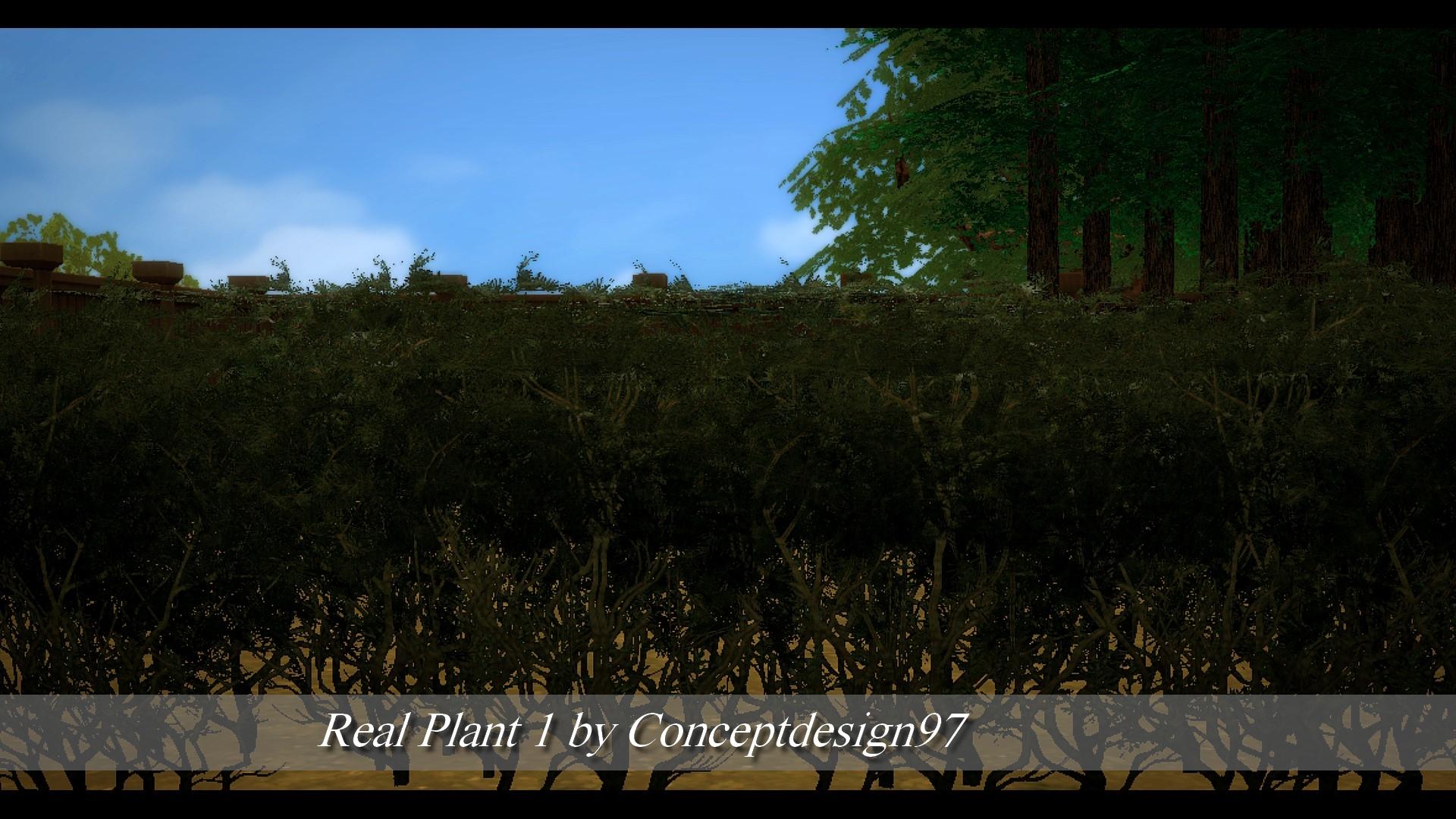 Real Plant 1.jpg