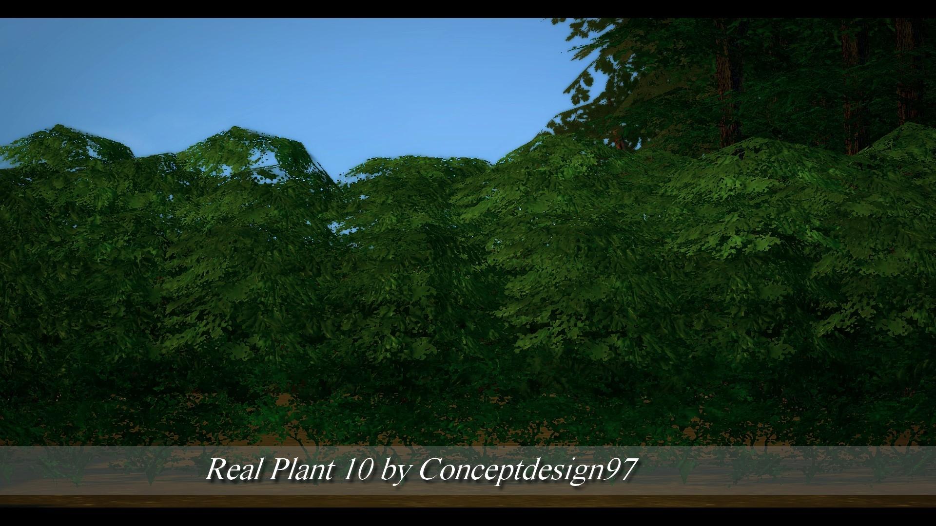 Real Plant 10.jpg