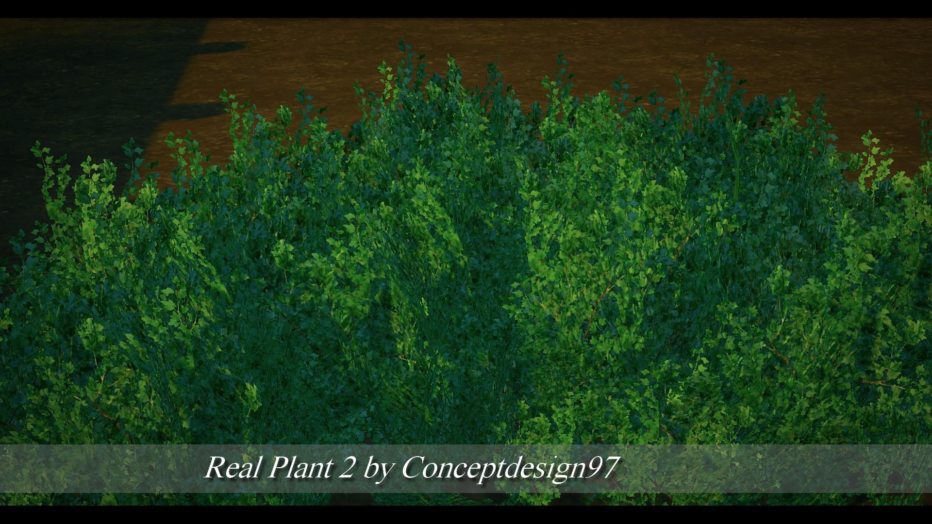 Real Plant 2.jpg