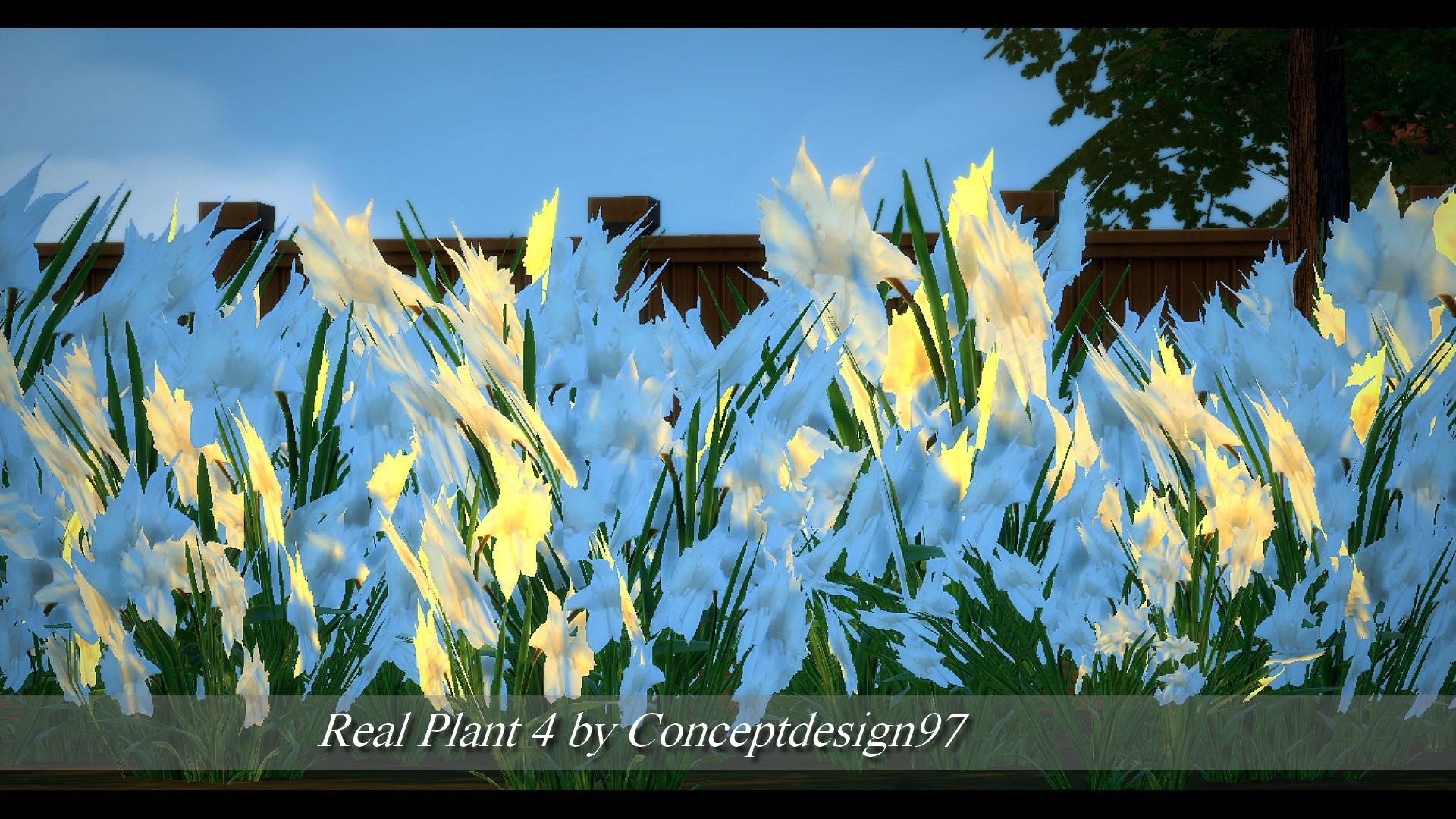 Real Plant 4.jpg