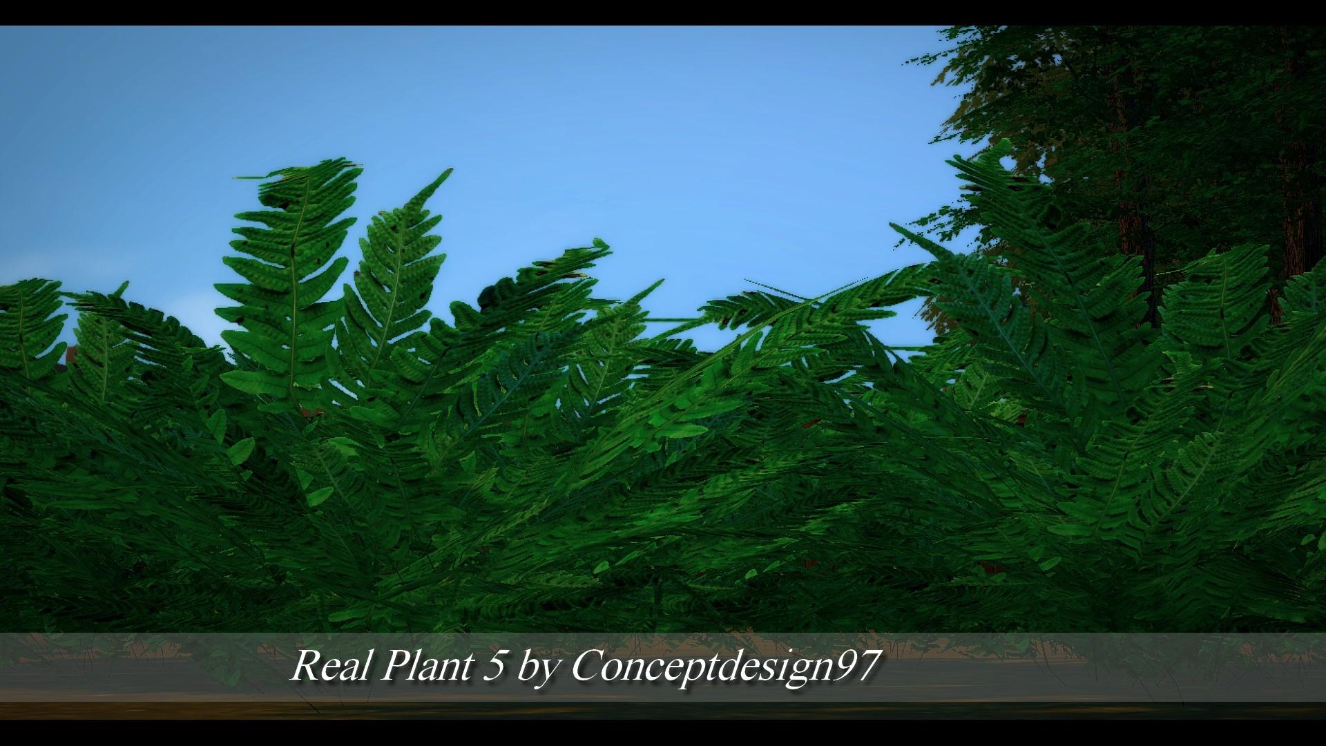 Real Plant 5.jpg