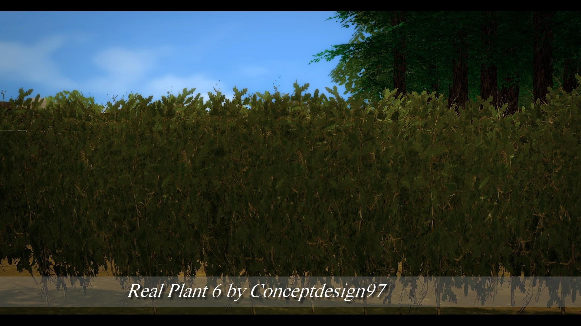 Real Plant 6.jpg