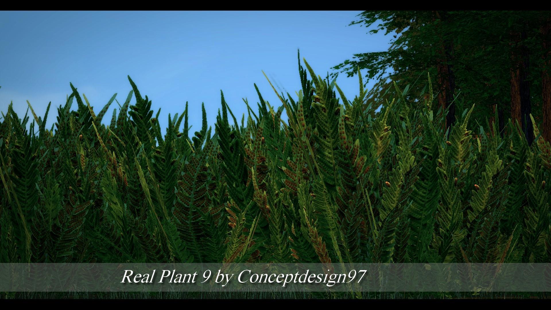 Real Plant 9.jpg